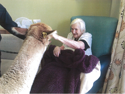 Alpacas join the residents at Signature House Image